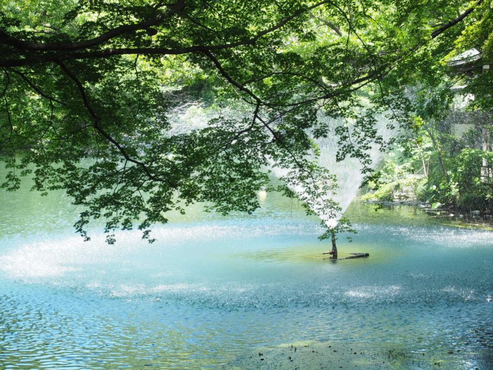 吉祥寺 モネ 池 井の頭公園
