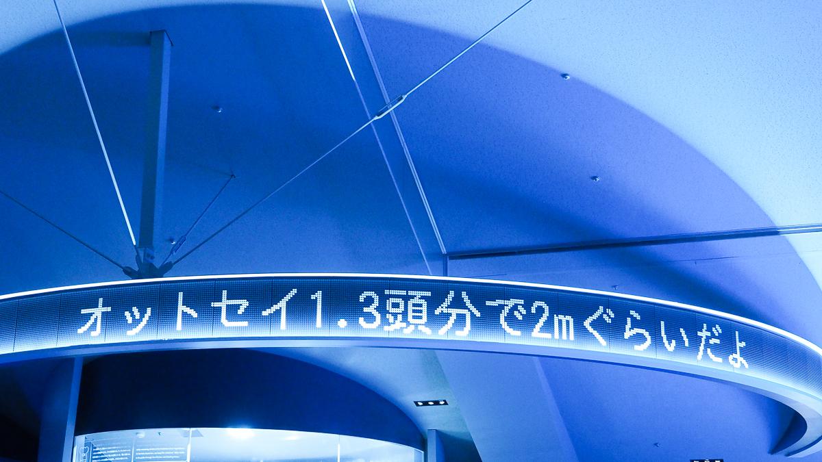 すみだ水族館 ミズクラゲ リニューアルオープン アクアベース ペンギン 下町散歩 東京観光 スカイツリー ソラマチ