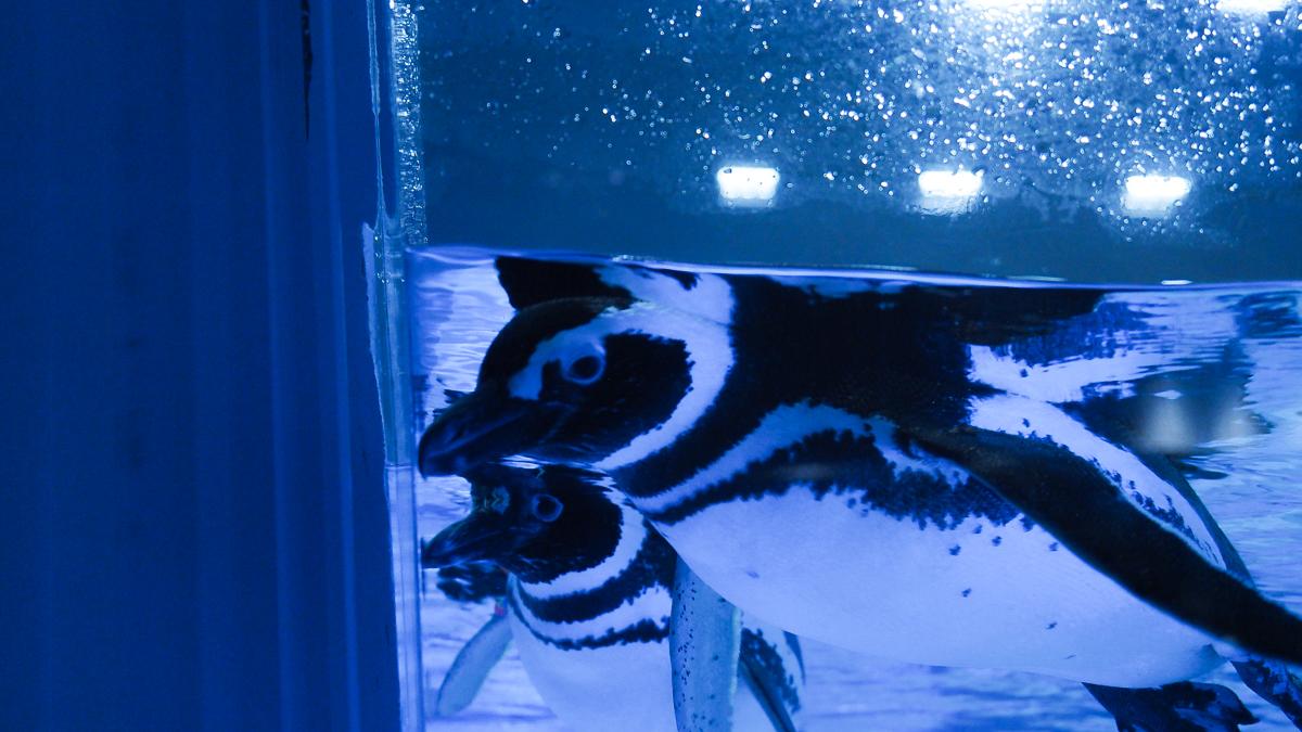 すみだ水族館 ペンギン スカイツリー 東京観光 おすすめ