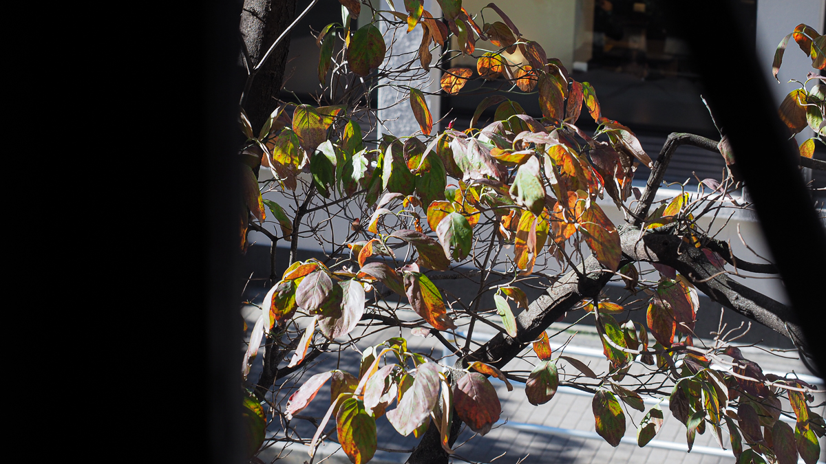 銀座 樹の花 コーヒー 老舗 喫茶店 銀座 有楽町 カレー ランチ スパイスカレー おすすめ