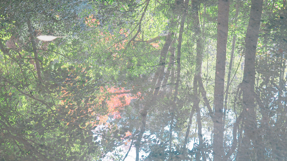 京都 南禅寺 天授庵 紅葉 時期 秋 もみじ 紅葉狩り 観光 kyoto 日本庭園 庭園