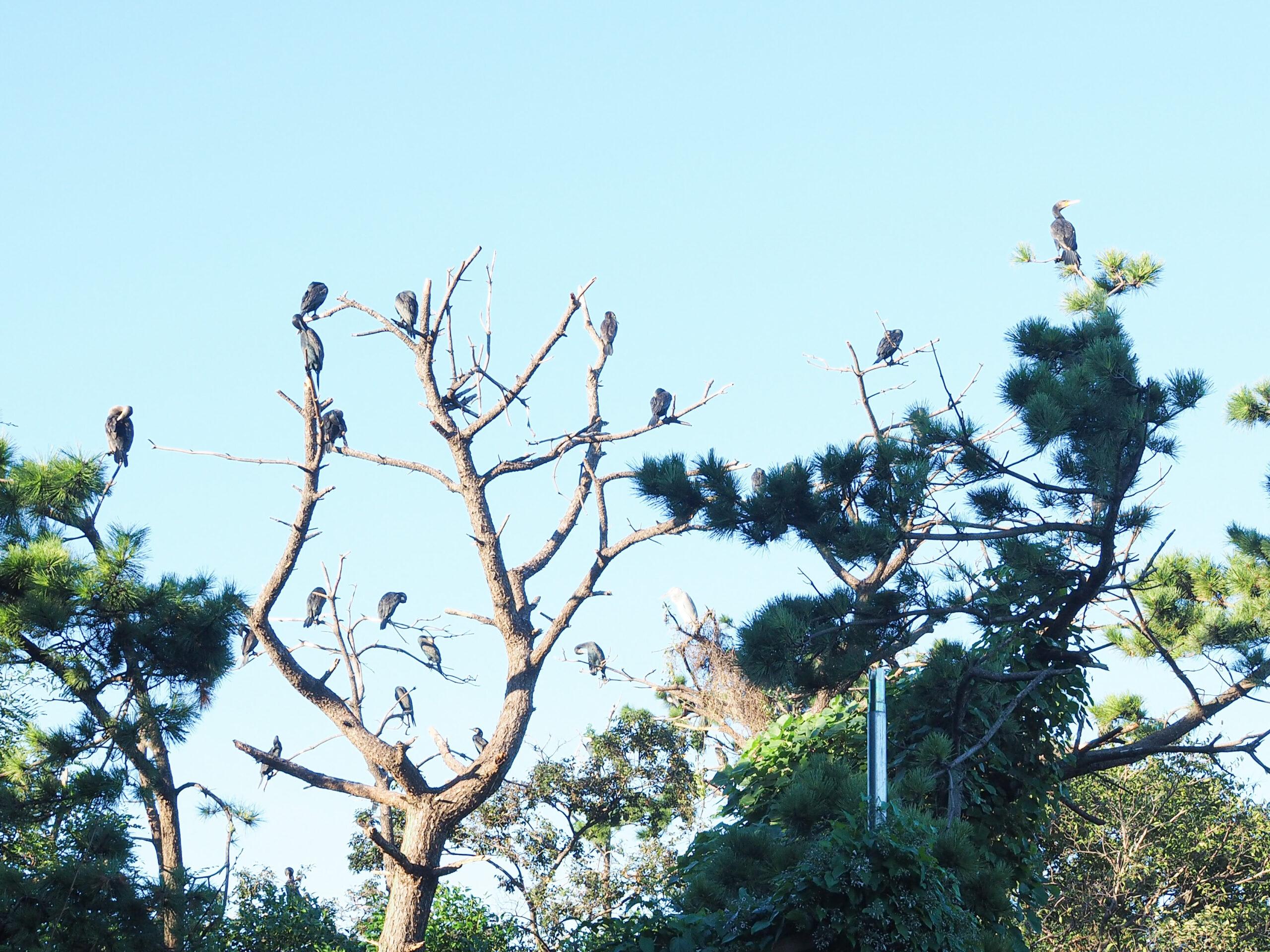 都内 おすすめ 公園 東京港野鳥公園 東京都野鳥公園 大田区 観光 リラックス 野鳥観察 バードウオッチング 落ち着く 自然 東京湾 日本野鳥の会 空が見たい 癒されたい 場所 お出かけ リフレッシュ 緑 ピクニック 鳥 水鳥 アオサギ
