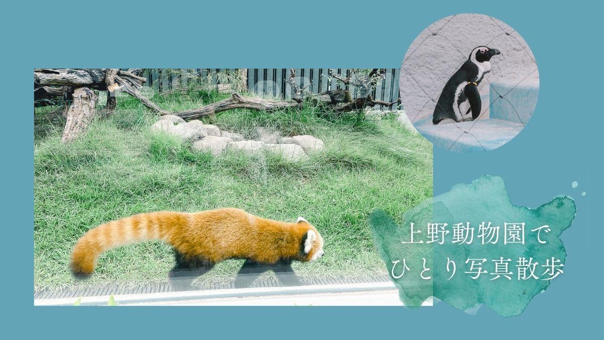 上野動物園 パンダ 整理券 予約 入場方法 ひとり 下町散歩 下町さんぽ 東京観光 おすすめ 動物園 上野公園 動物 上野 台東区 観光 レッサーパンダ